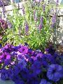 Front Garden 2007 (10)